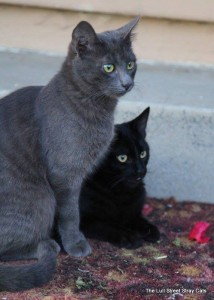 The two falsely imprisoned felines, hanging out together in my yard.