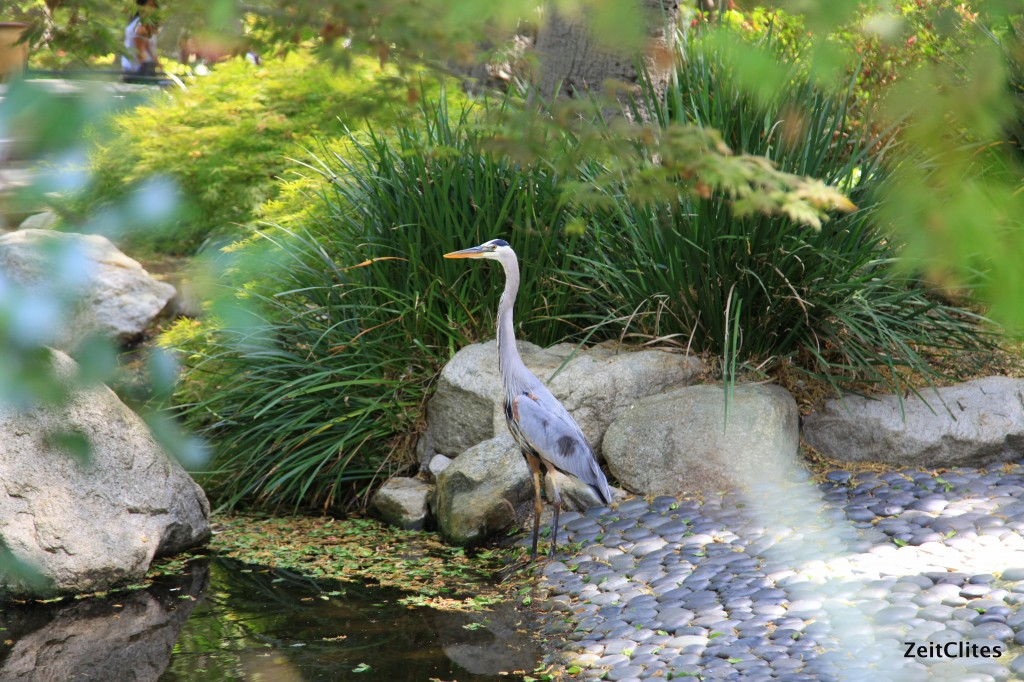 Japanese Garden - almost mistake this bird for a statute it was so still.