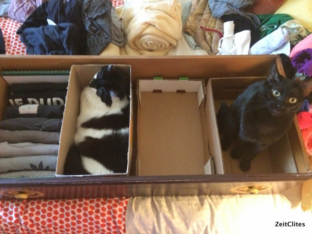 Konmari can be a little hard with cats.