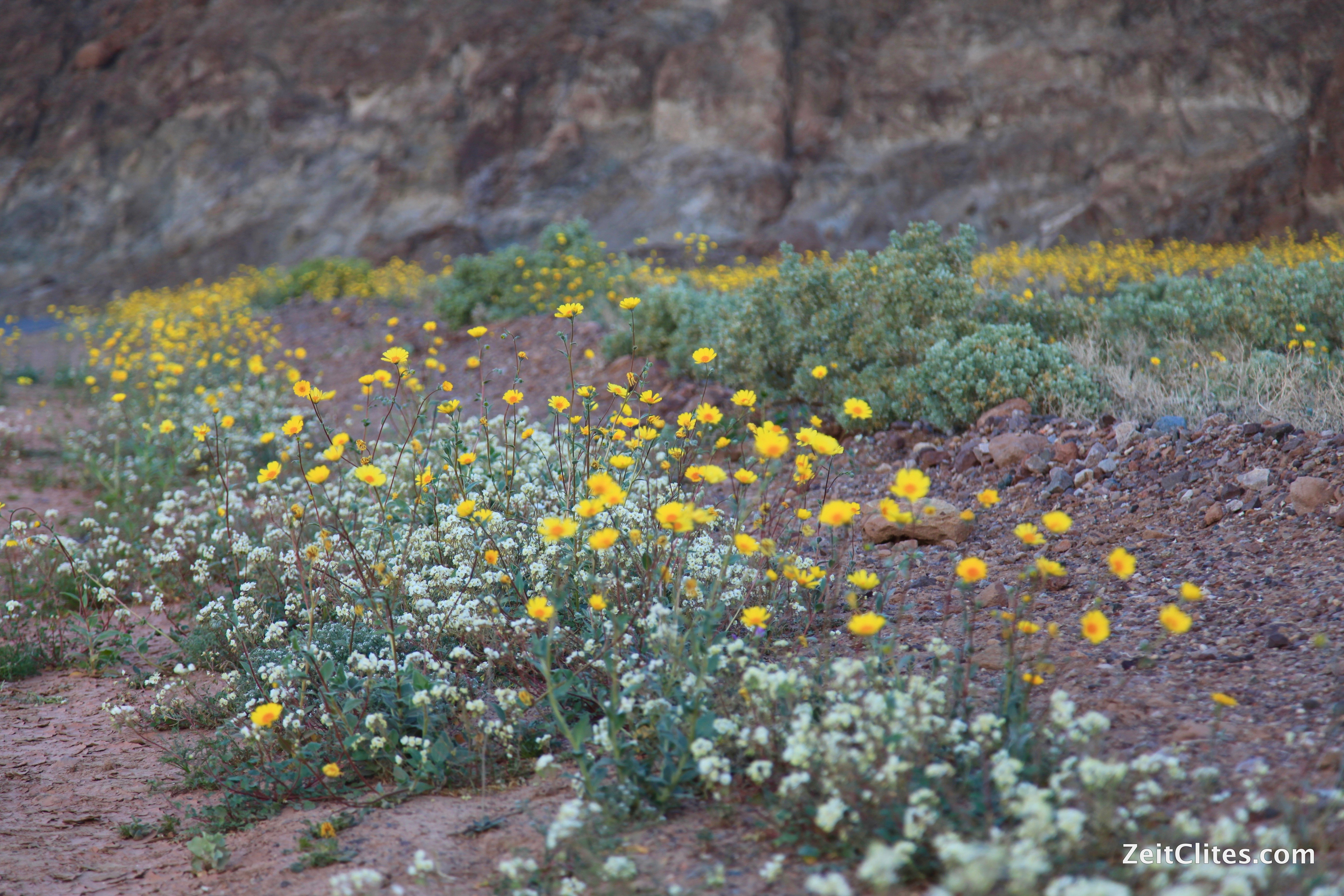 """What the Death Valley """"Super Bloom"""" Taught Me About Success"""